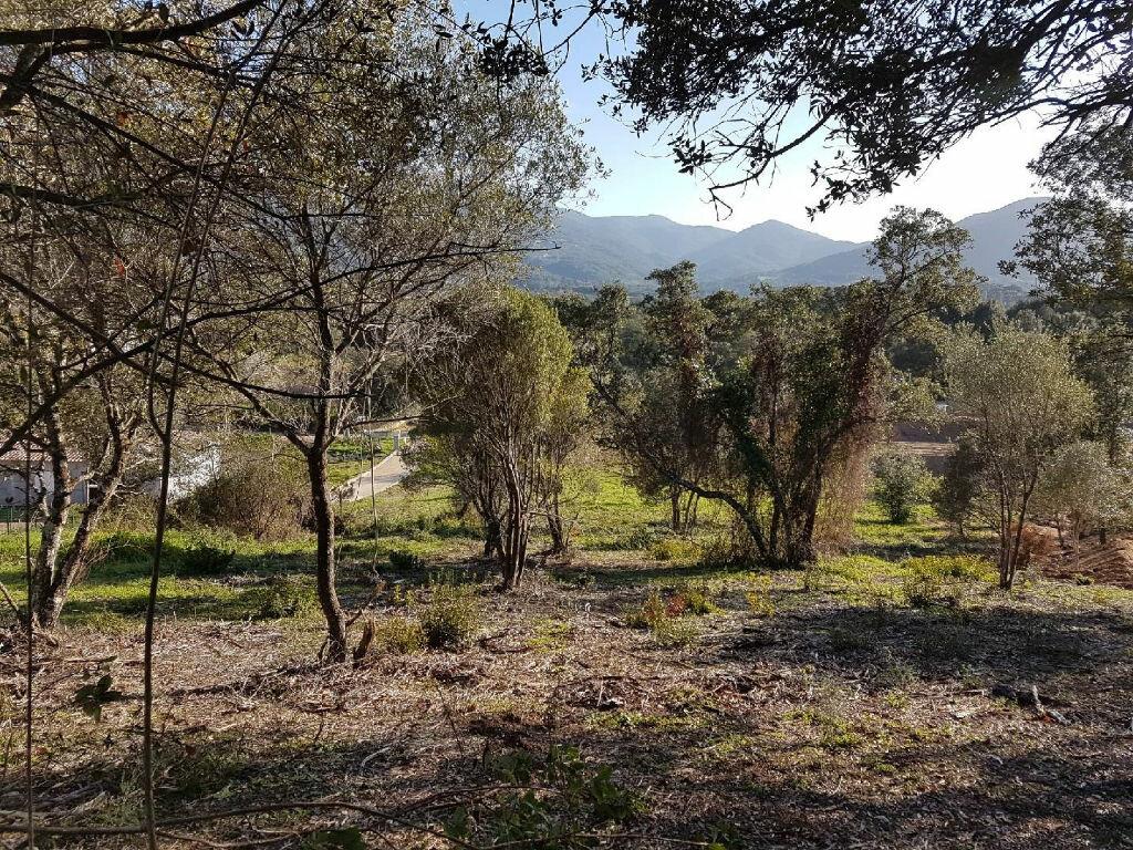 Terrain à vendre 0 1616m2 à Eccica-Suarella vignette-4