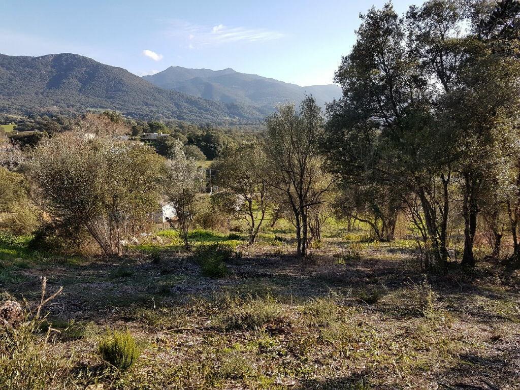 Terrain à vendre 0 1616m2 à Eccica-Suarella vignette-5