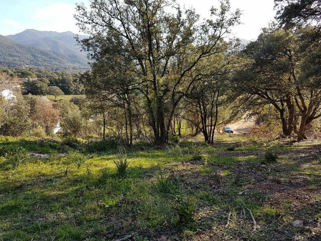 Terrain à vendre 0 1616m2 à Eccica-Suarella vignette-6