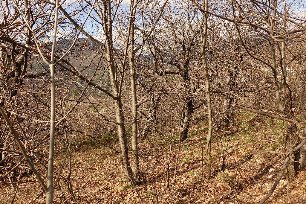 Terrain à vendre 0 1750m2 à Pied-de-Borne vignette-4