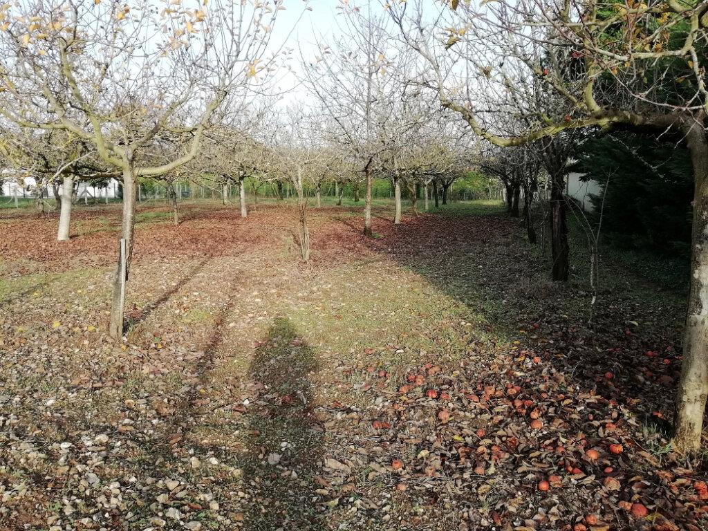 Terrain à vendre 0 1500m2 à Annesse-et-Beaulieu vignette-2