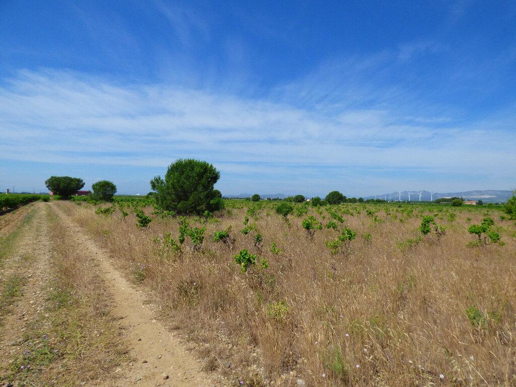 Terrain à vendre 0 24718m2 à Salses-le-Château vignette-2