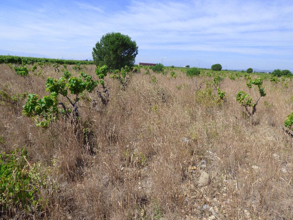 Terrain à vendre 0 24718m2 à Salses-le-Château vignette-3