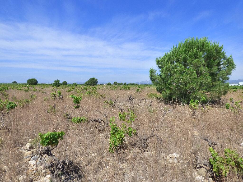 Terrain à vendre 0 24718m2 à Salses-le-Château vignette-6