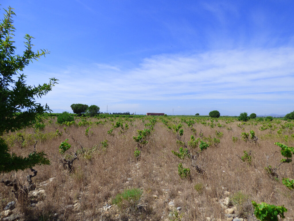 Terrain à vendre 0 24718m2 à Salses-le-Château vignette-7
