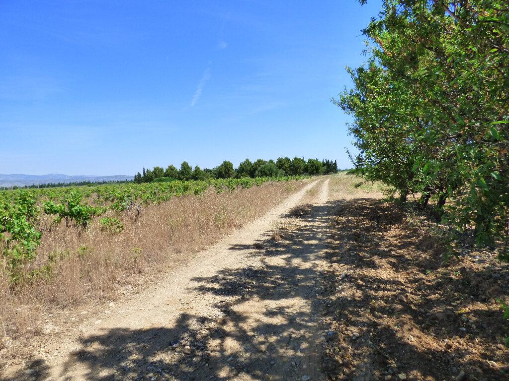 Terrain à vendre 0 10160m2 à Saint-Hippolyte vignette-3