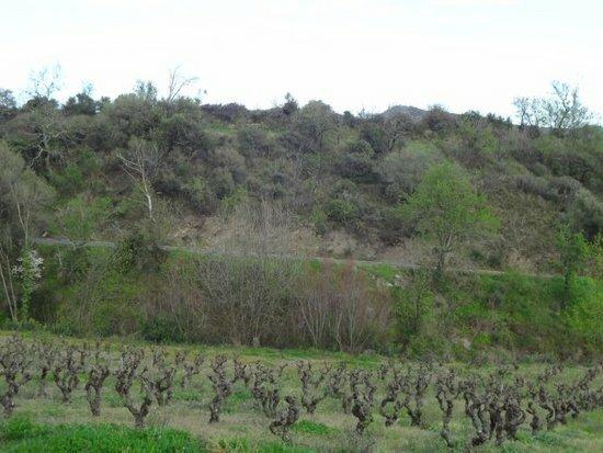 Terrain à vendre 0 1467m2 à Cascastel-des-Corbières vignette-1