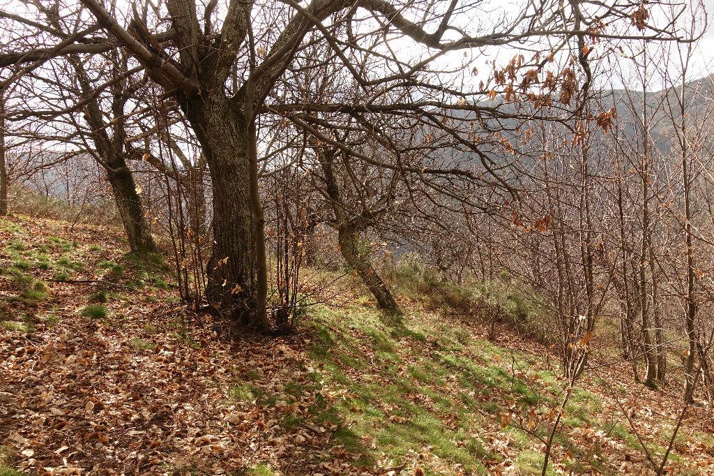 Achat Terrain  à Pied-de-Borne - vignette-6