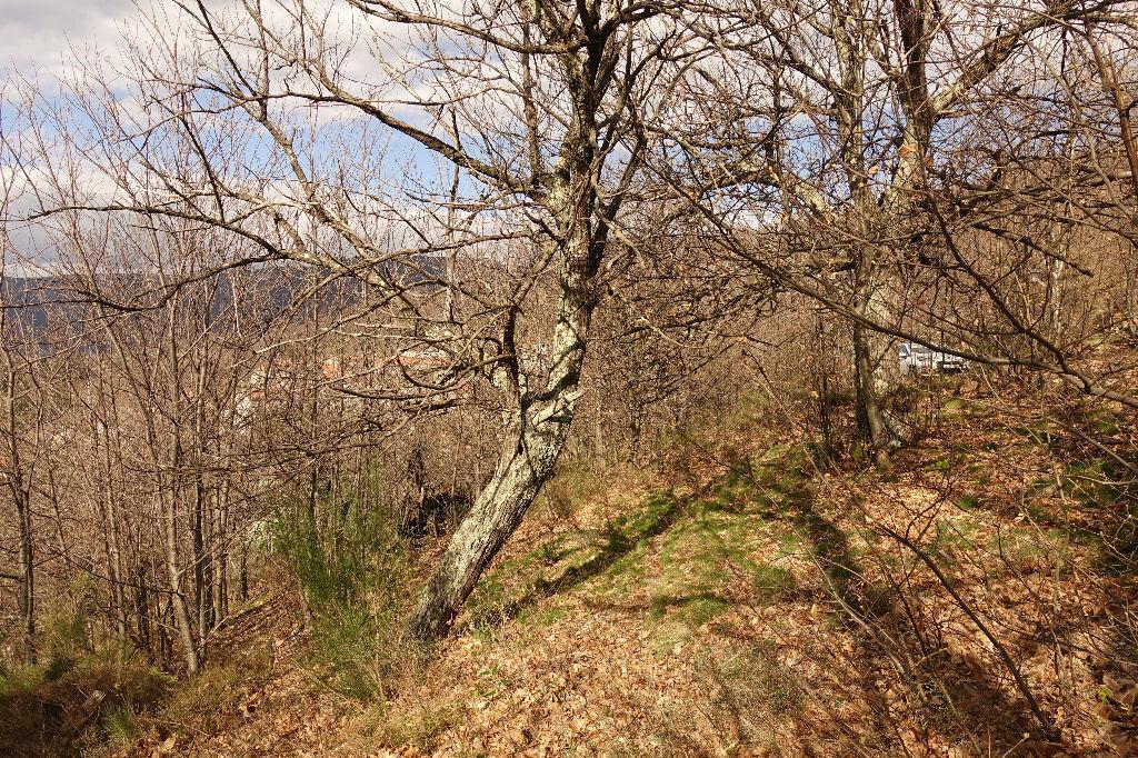 Achat Terrain  à Pied-de-Borne - vignette-8