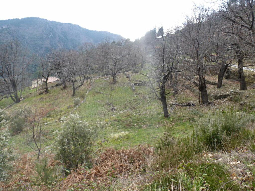 Achat Terrain  à Malarce-sur-la-Thines - vignette-3