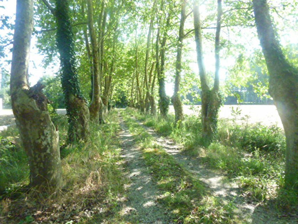 Achat Terrain  à Saugnac-et-Cambran - vignette-2