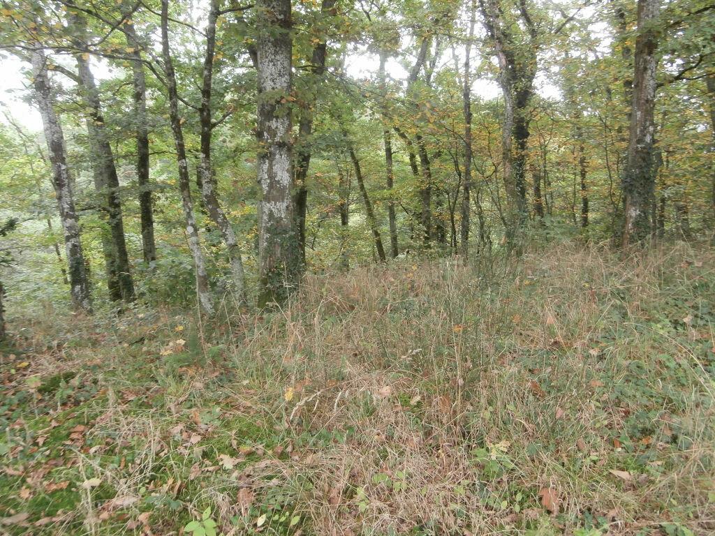 Achat Terrain  à Neung-sur-Beuvron - vignette-1