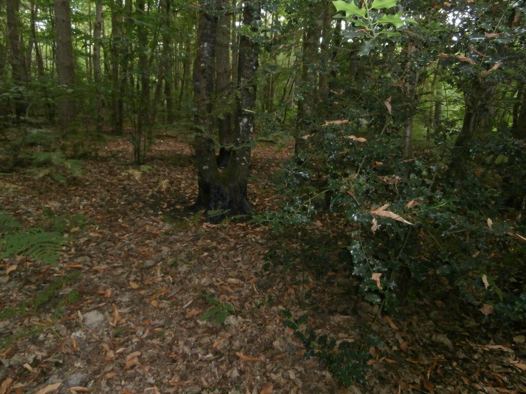 Achat Terrain  à Neung-sur-Beuvron - vignette-5