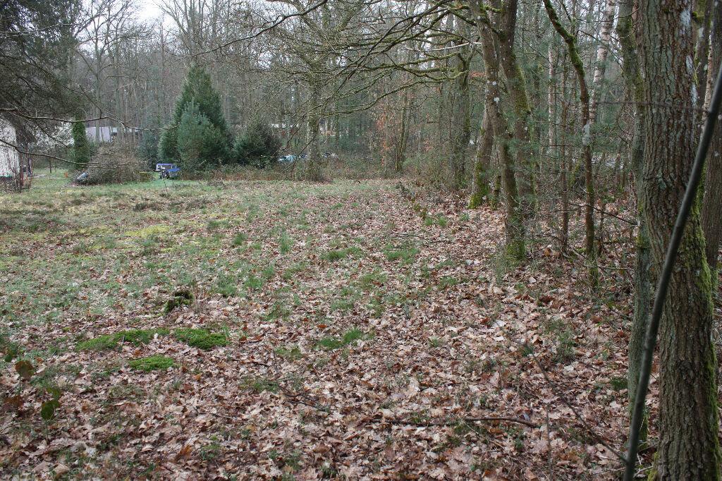 Achat Terrain  à Poigny-la-Forêt - vignette-1