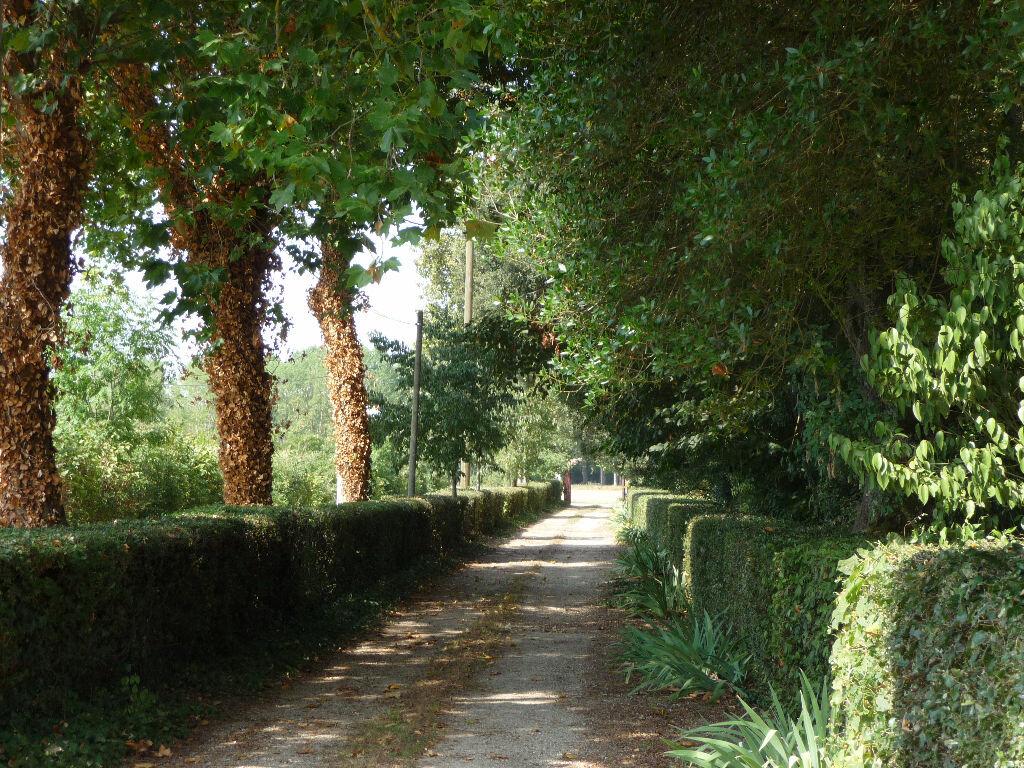 Achat Maison 10 pièces à Buzet-sur-Tarn - vignette-9