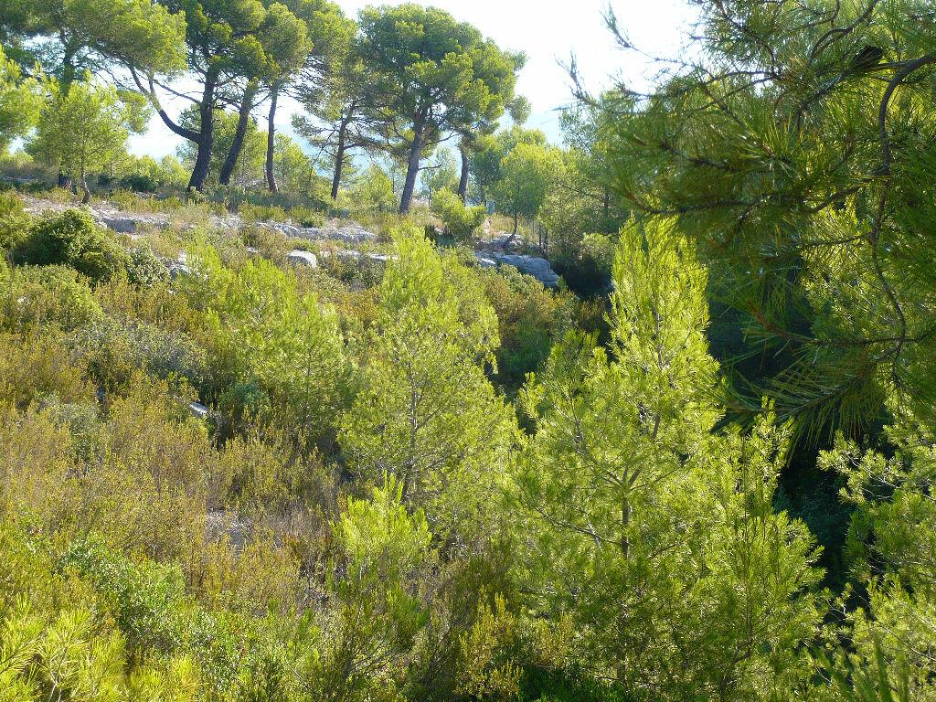 Achat Terrain  à La Cadière-d'Azur - vignette-4