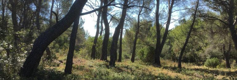 Achat Terrain  à Le Castellet