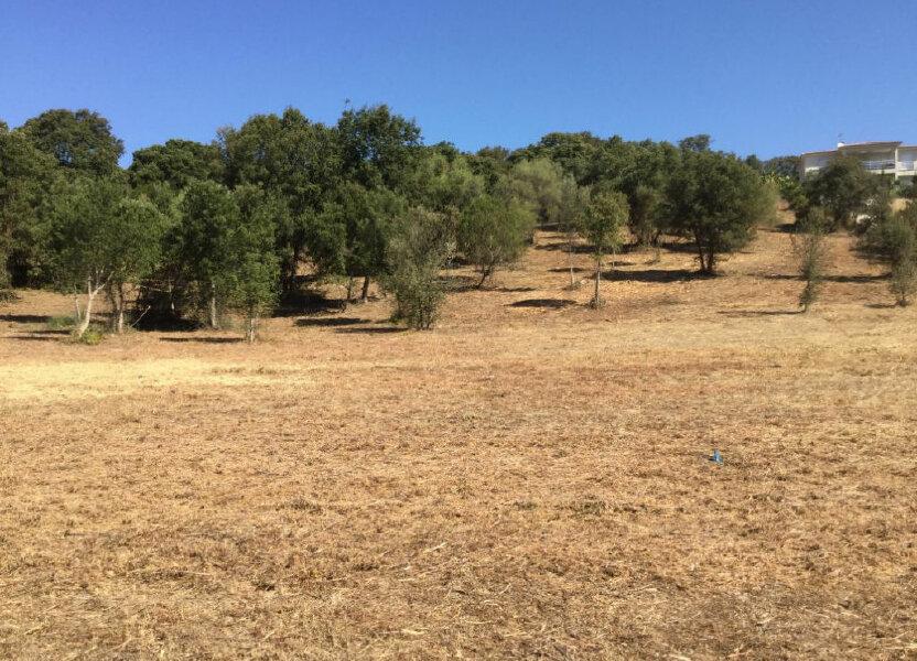 Terrain à vendre 1616m2 à Eccica-Suarella