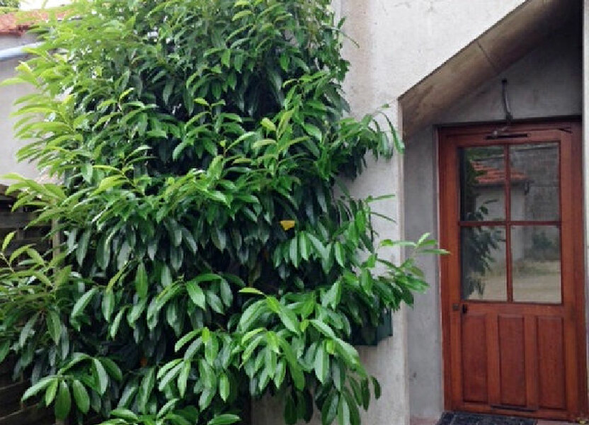 Appartement à louer 28m2 à La Ferté-Saint-Aubin