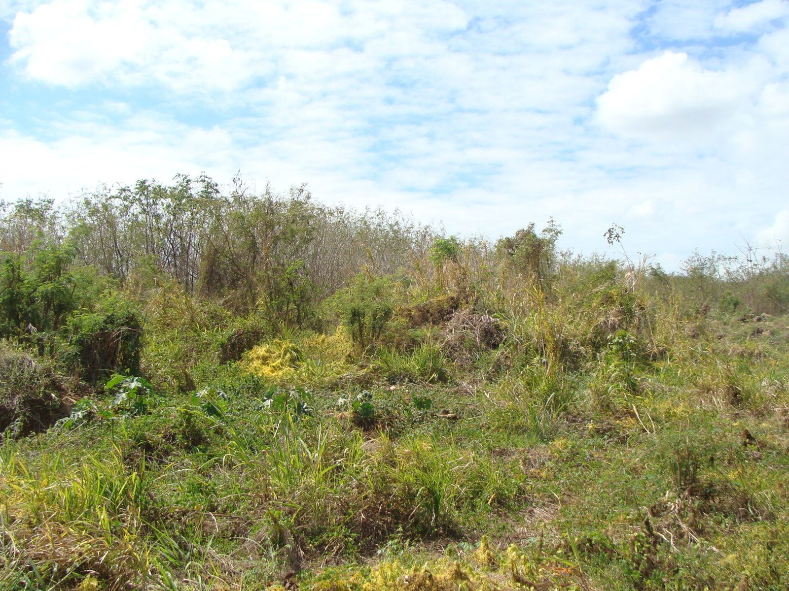 Terrain à vendre  3165.7m2 à Ile Maurice vignette-3