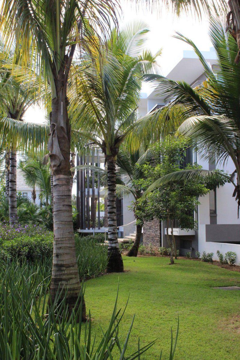 Appartement à louer 4 260m2 à Ile Maurice vignette-9