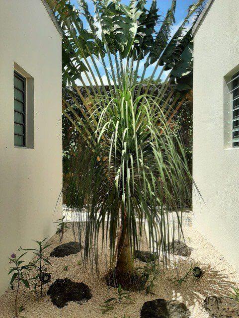 Maison à louer 7 1080m2 à Ile Maurice vignette-29