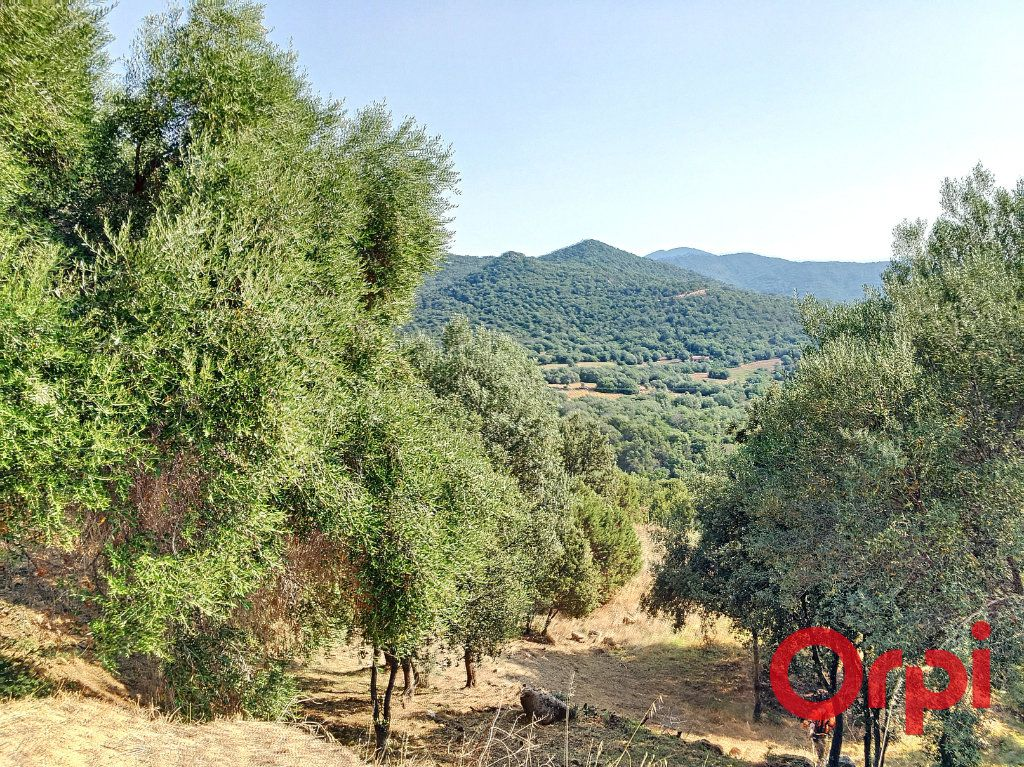 Terrain à vendre 0 9100m2 à Coti-Chiavari vignette-3