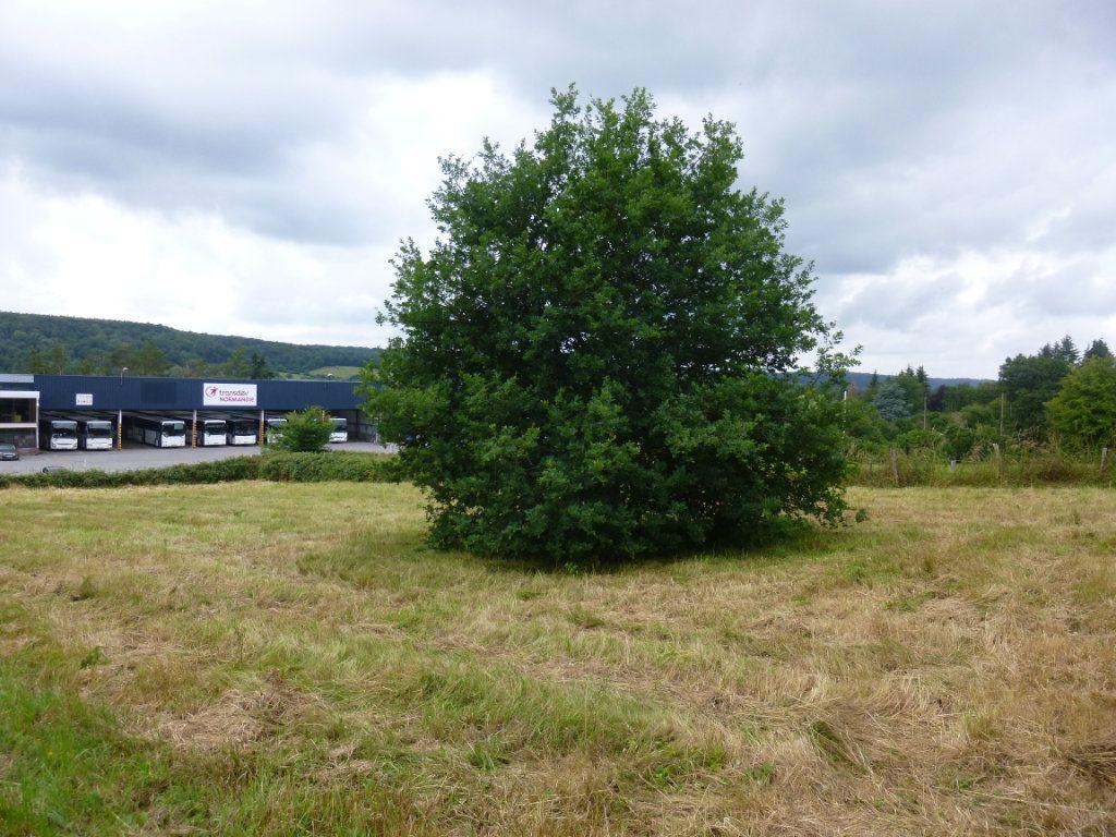 Terrain à vendre 0 1500m2 à Appeville-Annebault vignette-3