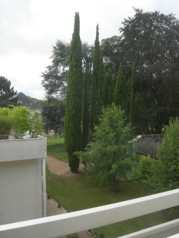 Appartement à louer 1 30.01m2 à Saint-Cyr-sur-Loire vignette-3