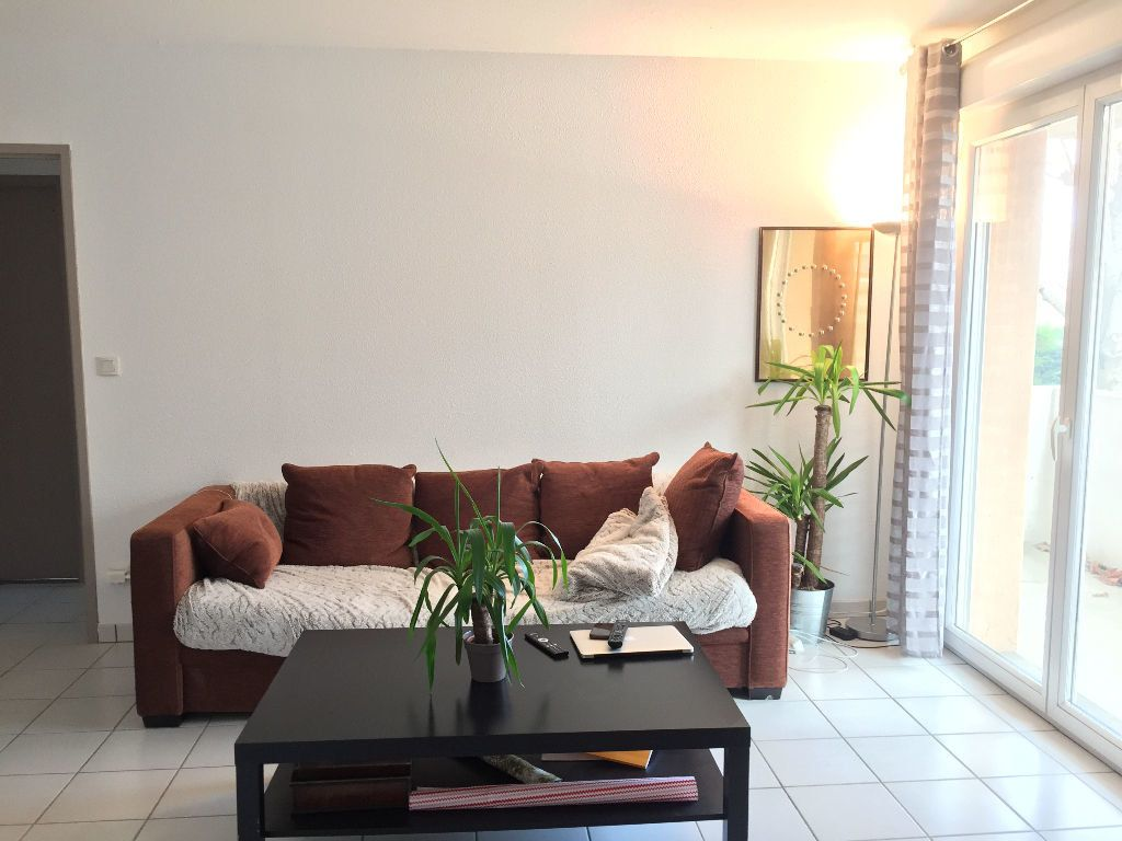 Appartement à louer 3 64m2 à Montrabé vignette-1