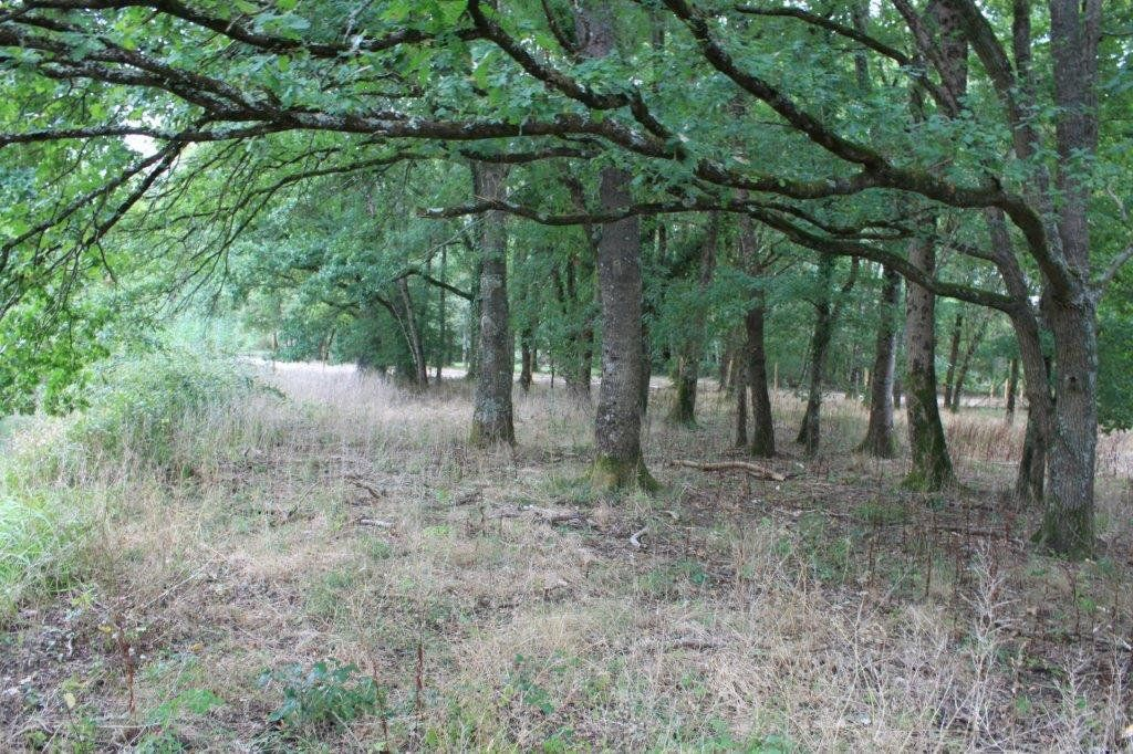 Terrain à vendre 0 13519m2 à Neung-sur-Beuvron vignette-3