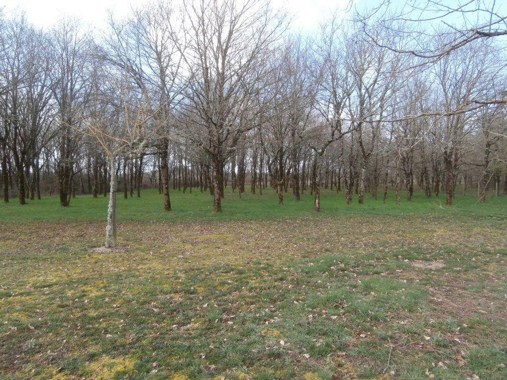 Maison à vendre 5 135m2 à Neung-sur-Beuvron vignette-16
