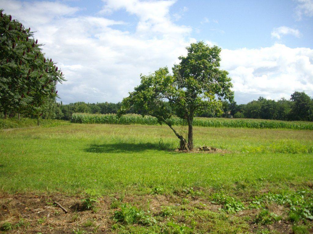 Terrain à vendre 0 1600m2 à Labastide-d'Armagnac vignette-3