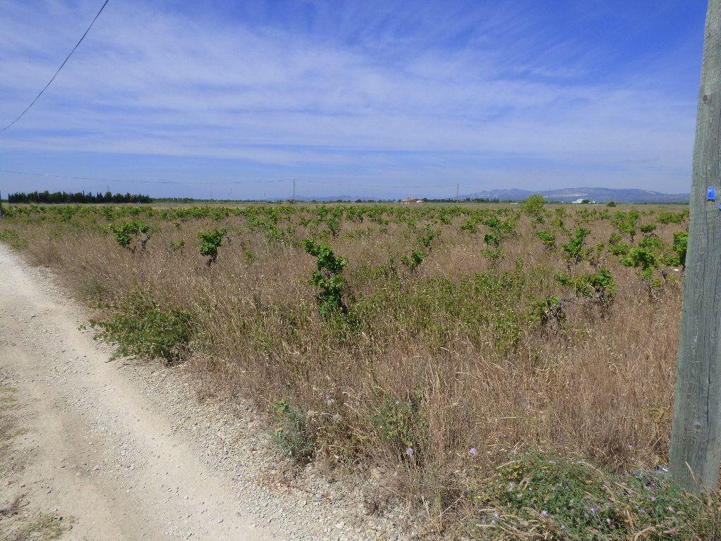 Terrain à vendre 0 15585m2 à Saint-Hippolyte vignette-7
