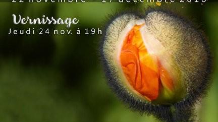 CARREMENT! EXPO PHOTOS du 22 novembre au 17 décembre.