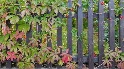 Vrai-Faux : Les branches du chêne voisin dépassent dans mon jardin. Je peux les tailler.